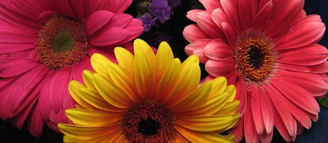 Arranjos de flores naturais? Use gérberas: lindas, fáceis de fazer e duram muito!!!!