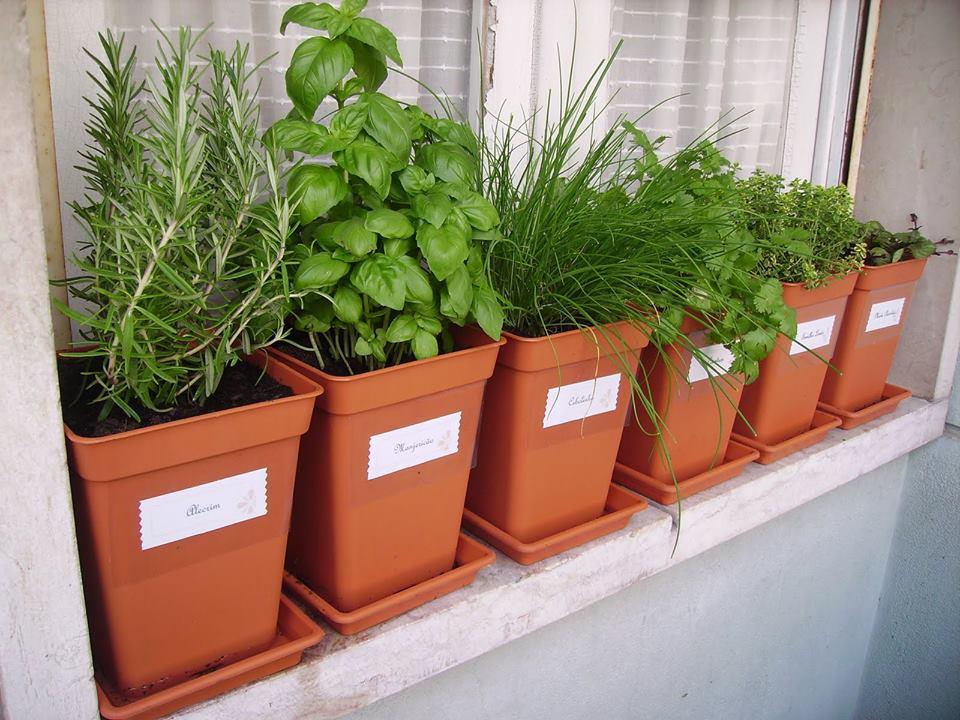 mini jardim de temperos : mini jardim de temperos: uma horta em casa? – Blog Bibeli – Utilidades de Casa e Decoração